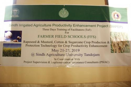 2nd day session of facilitators' training for FFS regarding Cotton,Sugarcane & Mustard crops on 23.5.2019 at Agriculture University Tandojam