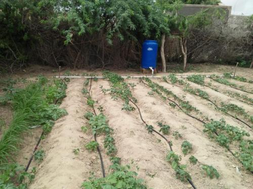 Kichen gardening kits installed at various villages of Taluka Chachro diatrict Tharparkar under SIAPEP