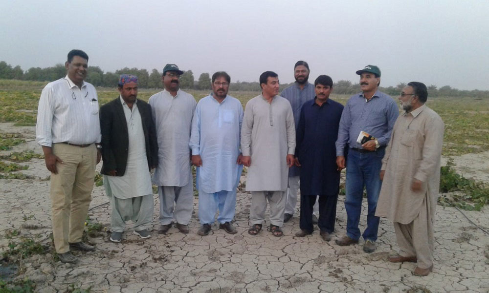 TTL Riaz khan WB with SIAPEP team visited FFS Sites at Distt: Matiyari & Distt: Mirpurkhas on 3/12/2018