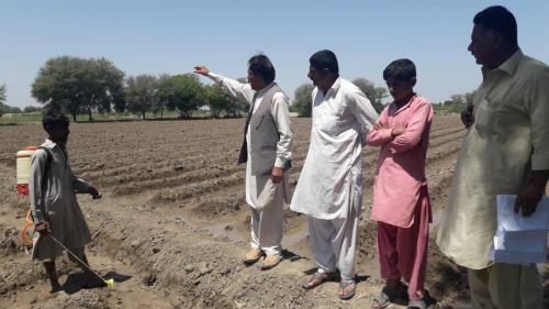 Cotton Sowing of FFS 2-AL Dhoro Naro, Farmer Rustam khan Zardari, SBA.
