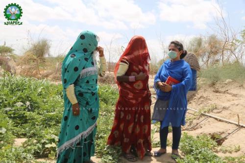Kitchen Gardening Activities at Village Fanghariyo, Taluka Mithi on 19-06-2020