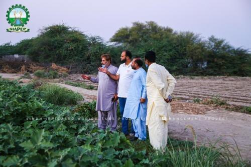 Siapep activities in District Badin