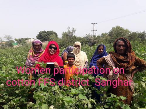Women participation on cotton FFS District Sanghar